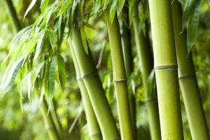 gesundheitsseite-bambus
